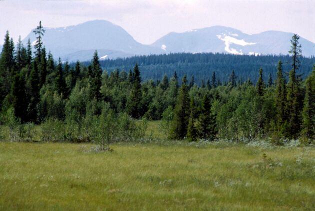 Marsfjällets naturreservat på 86 000 hektar är ett av många skyddade områden i Vilhelmina kommun.