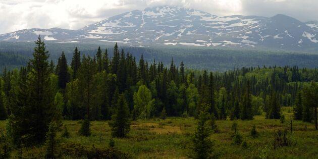 Dom om fjällnära skog meddelas nästa år