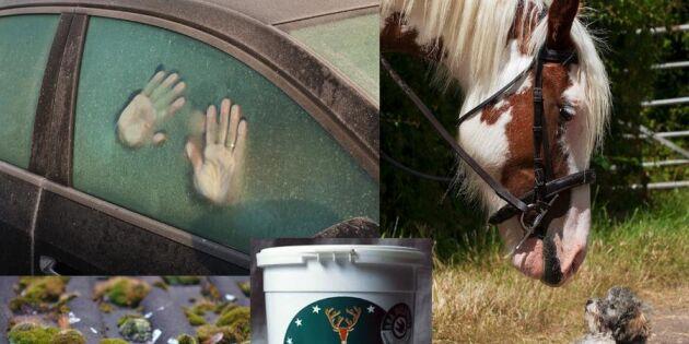 15 överraskande sätt att göra livet lättare med såpa