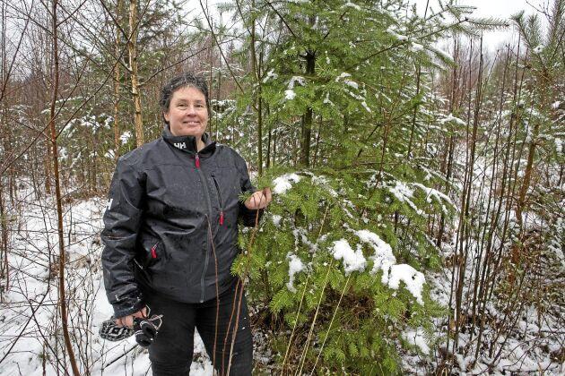 Cecilia Malmqvist, universitetslektor på Linnéuniversitetet forskar på hur man ska lyckas med planteringar av douglasgran.