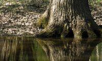 Jordbruk påverkar vattendrag mer än skogsbruk