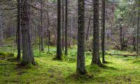 Stort intresse för grön skogsobligation