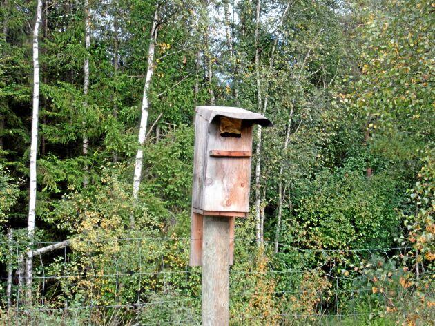 Veckans skogsbild kommer från Göte Carlsson i Järanäs.