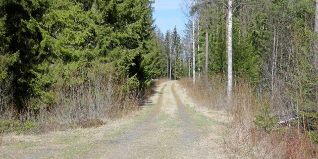 Pengar att tjäna på bra skogsbilvägar