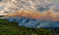 1,4 miljoner hektar skog brinner i ryska Arktis