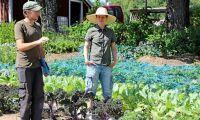 De tror på andelsjordbruk – utan mellanhänder