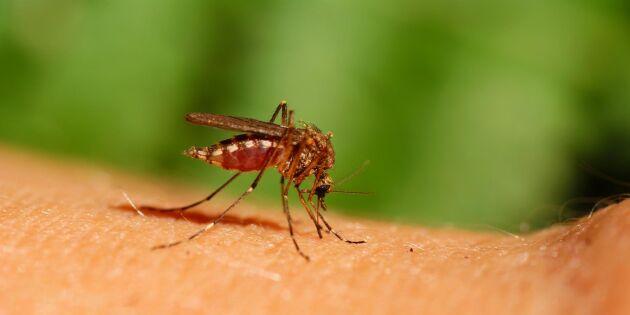 Okända (?) men effektiva metoden mot insektsbett