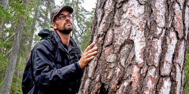 Så fick skogen nytt liv efter Tyrestabranden