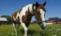 Hästföretag gynnar den psykiska hälsan