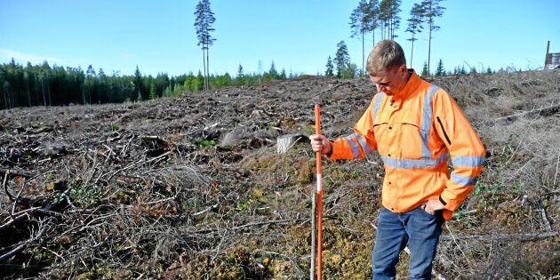 Väl planerat skogsbruk nyckeln till lönsamhet