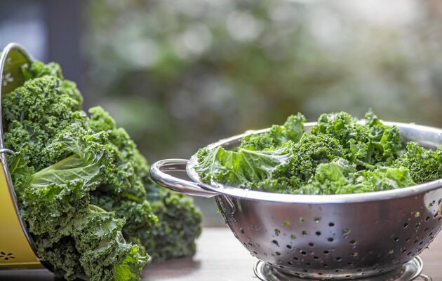 Frossa i grönkål eftersom det är så nyttigt och bra för kroppen!