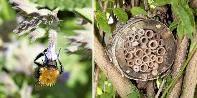 Naturskyddsföreningens kampanj ska rädda utrotningshotade bin