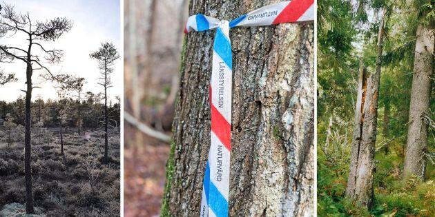 Ny statistik: Så mycket skog skyddas i Sverige