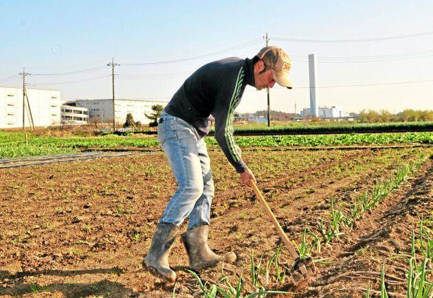 När Setsuo Nakagoshi började med grönsaksodling visste han knappt någonting om odling.
