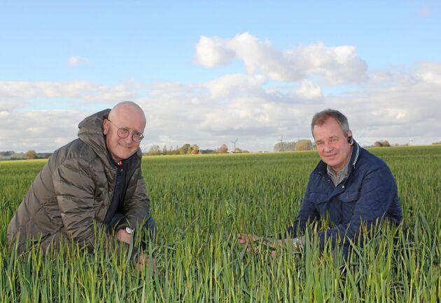 Per Christerson, som driver växtodlingsgården med Krister Wiengren, började redan i maj ana vilka konsekvenser torkan skulle få.