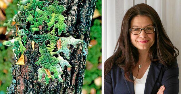 Skogsstyrelsen gör ett gigantiskt ingrepp i äganderätten när skog värd 30 miljarder kronor avsätts till nyckelbiotoper, skriver riksdagsledamoten Helena Lindahl (C).