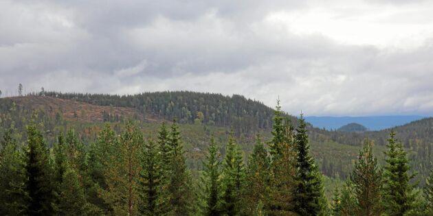 Skogspriserna fortsätter uppåt