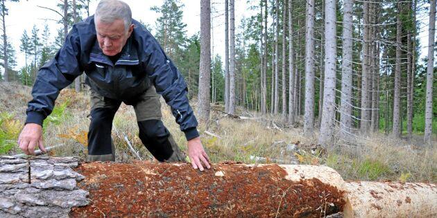 Välkomnar besökare i sin tätortsnära skog