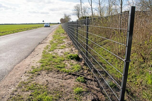 Det danska vildsvinshägnet längs gränsen mot Tyskland kommer att bli 68 kilometer långt.