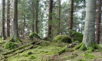 Skyddade skogar sköts dåligt