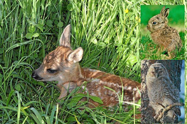 Djurens ungar är söta och kan se ensamma och övergivna ut men behöver sällan hjälp av människan.