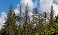 Granbarkborren frodas i de statliga naturreservaten