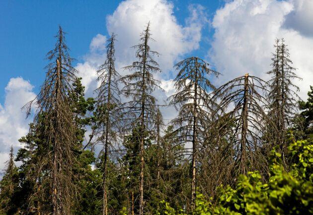 Barkborrarna frodas i statens naturreservat och sprids till andra skogsägare, anser debattörerna.