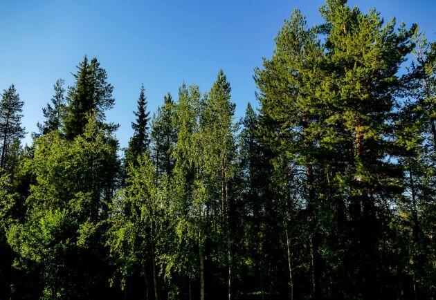 Regeringen måste sätta stopp för att det bildas ett naturreservat i Värnanäs, utanför Kalmar, skriver debattören Mats Blomberg.