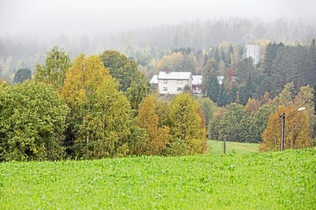 Jan-Erik Sundströms gård ligger vid skogskanten i Djupsjö 1,5 mil norr om Nordmaling.