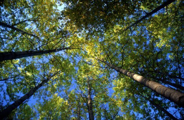 """""""Varför inventerar Skogsstyrelsen nyckelbiotoper när man i dagsläget inte har något särskilt uppdrag från regeringen att göra det?"""", undrar tre riksdagsledamöter."""