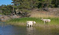 Krävs mer forskning om nordiska lantrasdjur