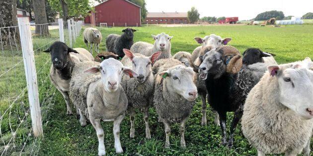 Konkurs för Tangará Farm – Vinborg krävs på 4 miljoner