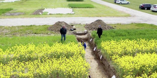 ATL TV: Sommarspecial om växtodling