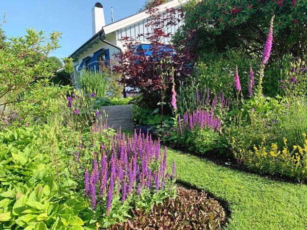 På husets framsida går gången genom perennrabatter i lila toner fram till den kullriga bron som Håkan byggt själv.