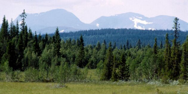 Naturvårdsverket: Överklaga inte domen om fjällnära skogar
