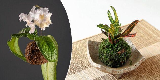Upptäck kokedama - rolig japansk blomsterkonst