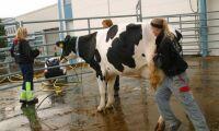 SLU ställer in snabbspår för djurskötare