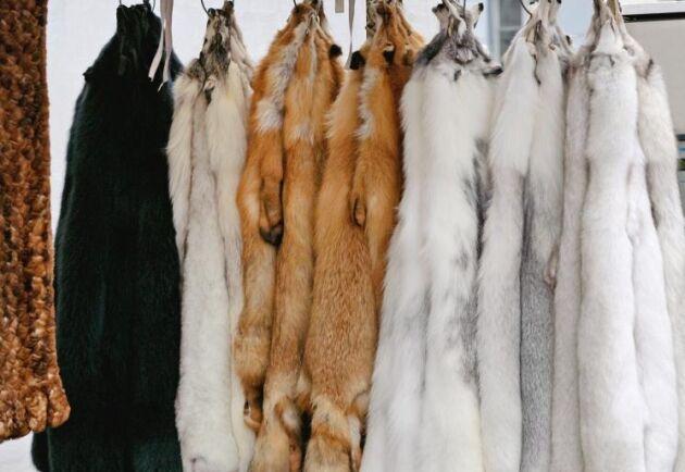 Vid årsskiftet 2024/2025 ska den norska pälsnäringen var avvecklad.