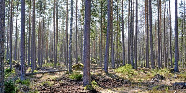 Skogen –en lönsam investering