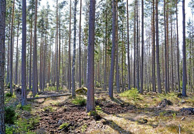 Skogssällskapets skogsindex sjunker i hela landet då virkespriserna ökar mer än fastighetspriserna.