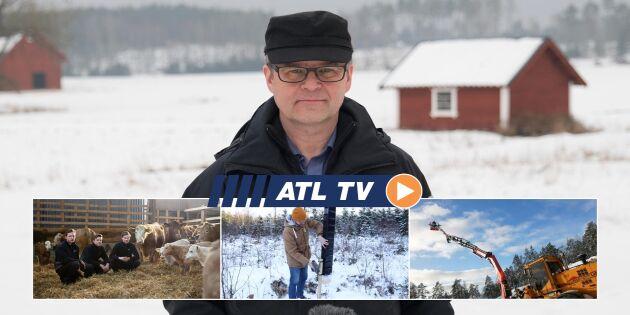 ATL TV: Ny barkborrefälla byggs på höjden