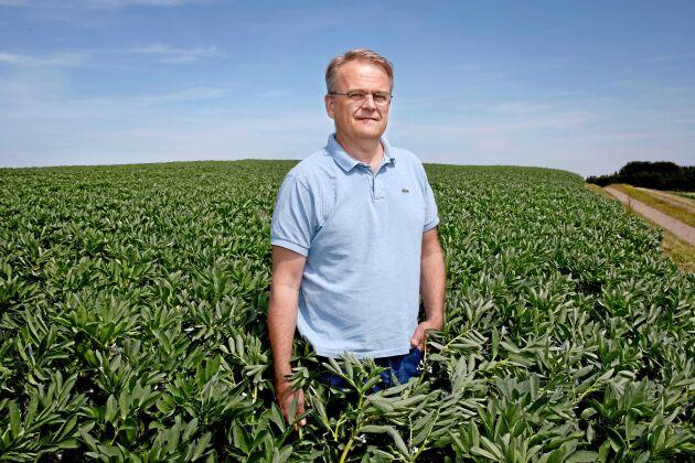 Odlingen av åkerbönor upptar omkring 90 hektar. Skörden är normalt 5-5,5 ton per hektar. Totalt blir det alltså 400-500 ton. Johan Karlzén tror starkt på inhemskt protein.