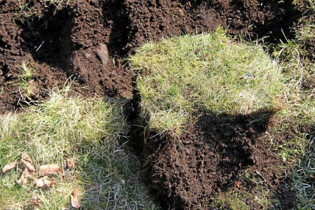 Den första fåran är ett spadblad djup och ett spadblad bred.