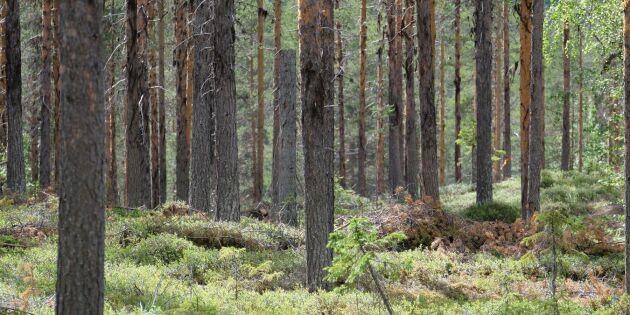 Skogsstyrelsen fortsätter med nationella skogsprogrammet