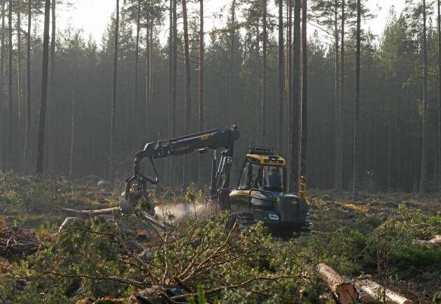 2019 slutade svagt, men blev totalt sett ganska bra för skogsindustrin.