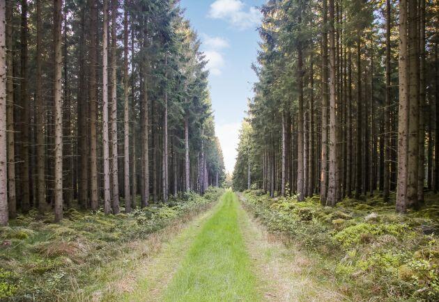 Medelbonitet på innehavet är 10 skogskubikmeter per hektar och år och det årliga uttaget beräknas till cirka 30000 kubikmeter per år.
