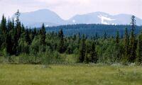 Fjällnäraskog-målen tas upp i Mark- och miljööverdomstolen