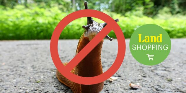 Tuff snigelsommar väntas: Plocka 100 sniglar per minut med Slugmaster