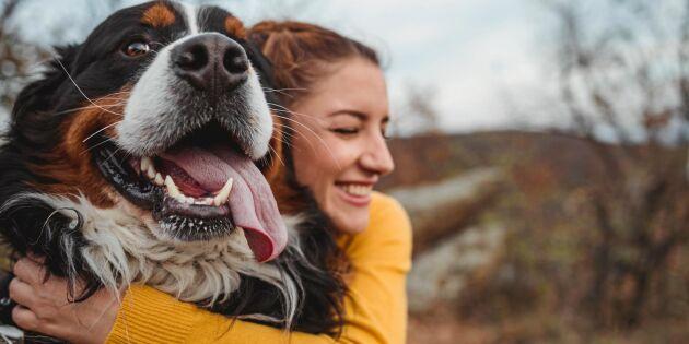 Svensk studie: Att ha hund ökar chansen att överleva efter allvarlig sjukdom
