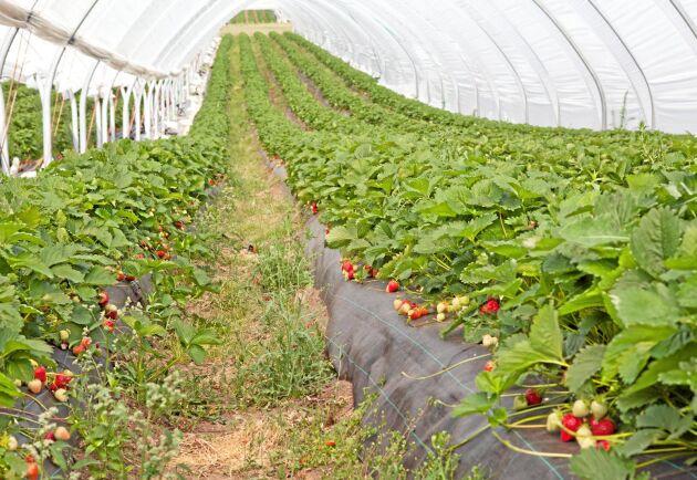 Snabbutbildningen skulle bland annat göra det möjligt för arbetslösa att ta olika jobb inom trädgårdsnäringen.